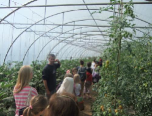 """""""Von wilden Kühen und roten Tomaten"""" Natur-Erlebniscamp 2013"""