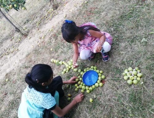 Rückschau zur Aktion: Ferien in der Natur – für Kinder (Juli 2020)