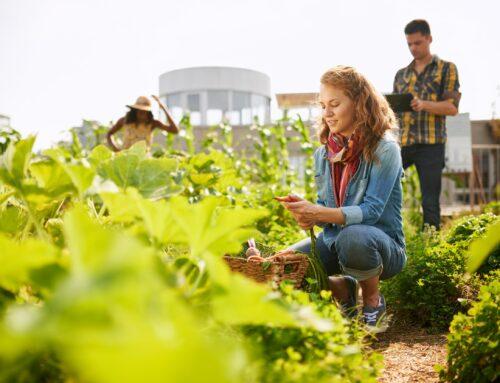 """Tagung """"Nachhaltige Landwirtschaft in der Region Frankfurt-Rhein-Main fördern und finanzieren."""" – 09.06.2021"""
